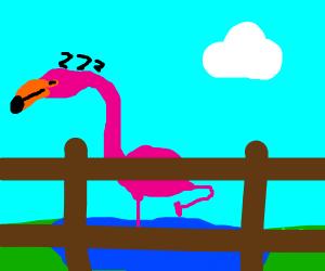 A sleepy flamingo