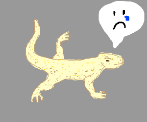 Sad sand colored lizard