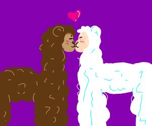 lama finds love