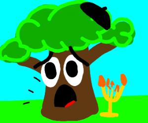 A scared jewish tree