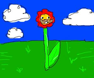 Handsome flower