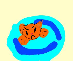 A Cat Swiming