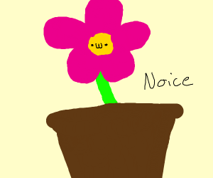 a really nice flower :3