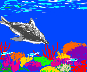 dolphin in coral reef