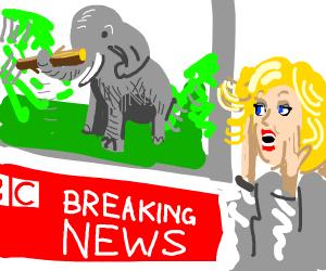 BBC news: elephant picks up a branch