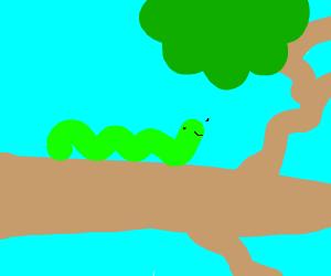 Caterpillar on a tree branch