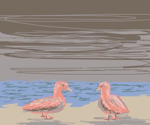 two ducks meet at the beach