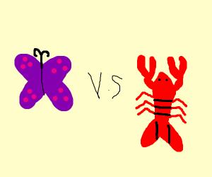 butterfly V.S lobster