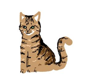 short hair tabby cat