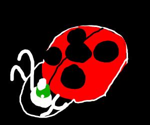 Ladybug eating a Chart