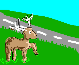 a moose crossing the road