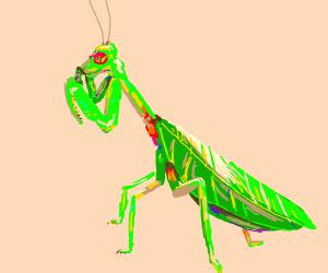 praying, praying mantis