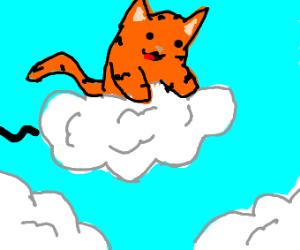 Orange cat flies on a cloud!