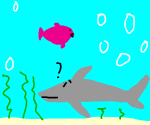 Shark is confused about pink fish