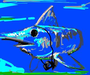 Swordfish tourist