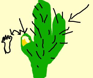 ingrown cactus toenail