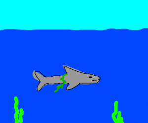 a shark with kelp on its back