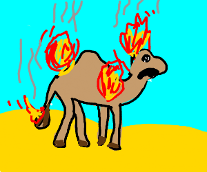camel on fire