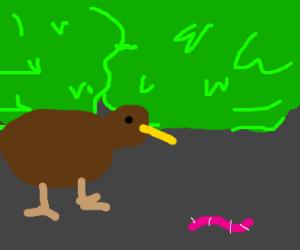 Kiwi bird smells a worm in the ground