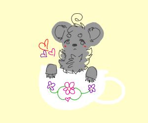 Koala in a Teacup