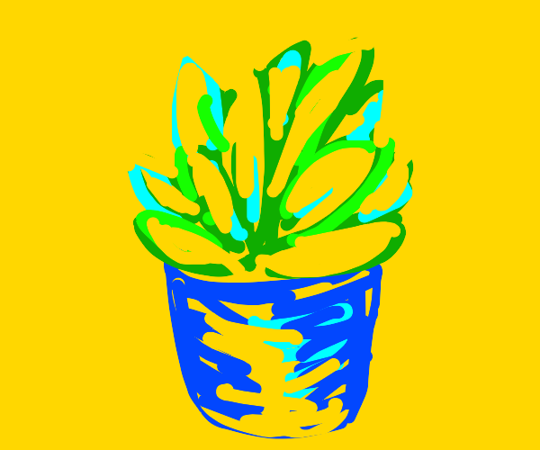 drawing of a succulent