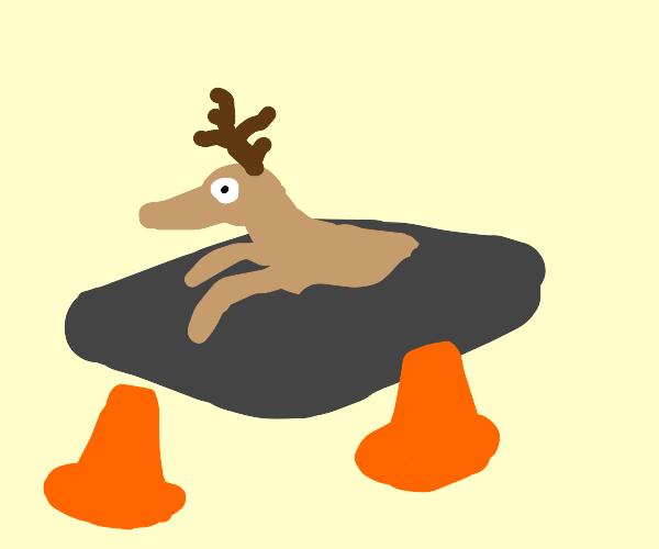 deer stuck in cement