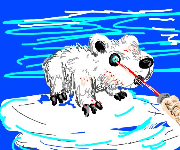 Shining Laser Pointer in Polar Bear's Eye