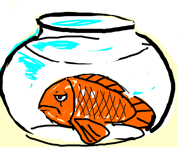 fat and depressed goldfish in a fishbowl