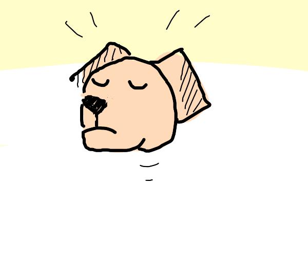 Dog head floating