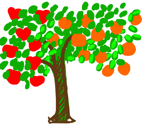 Apple & Orange tree hybrid.