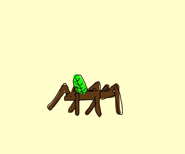 a pet stick with a singular leaf