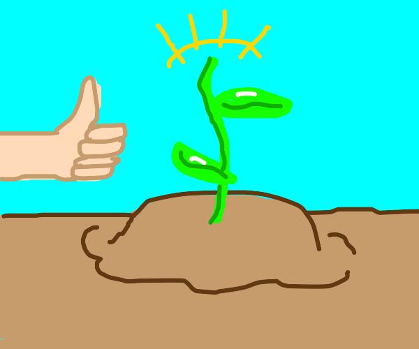 A good planting