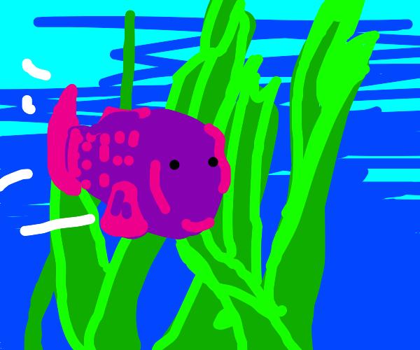 fish swimming through seaweed