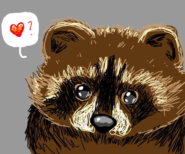 raccon wants to give you it's love
