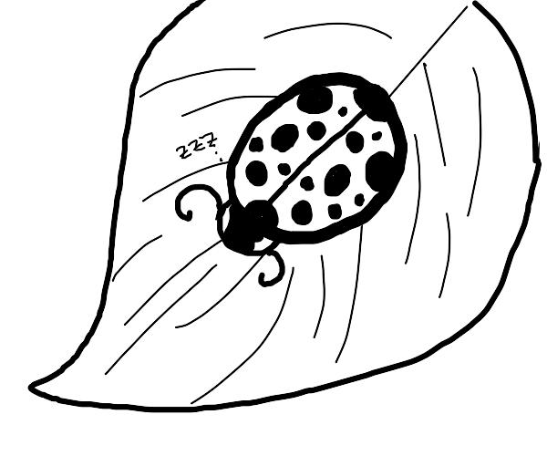 Sleeping ladybug