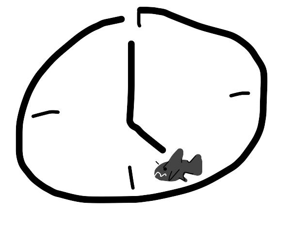 shark o'clock