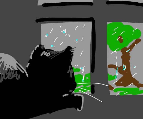 Depressed cat :c