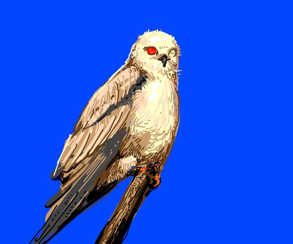 Bird with laser eyes