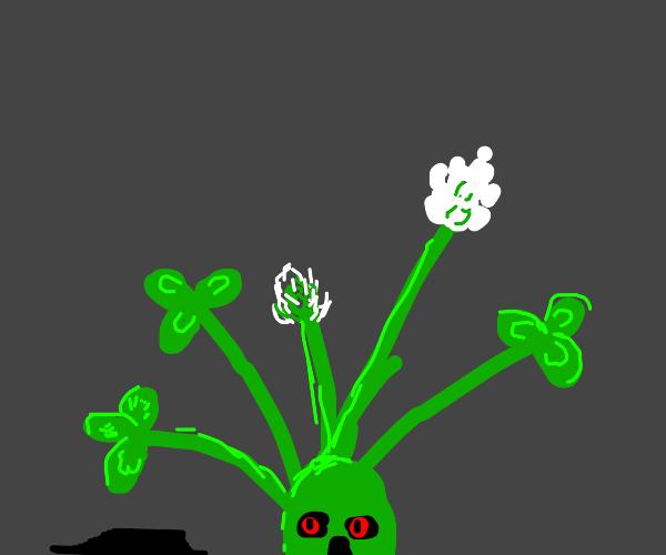 evil clover
