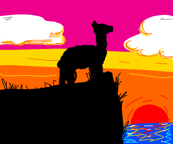 Alpacas watching a Sunset