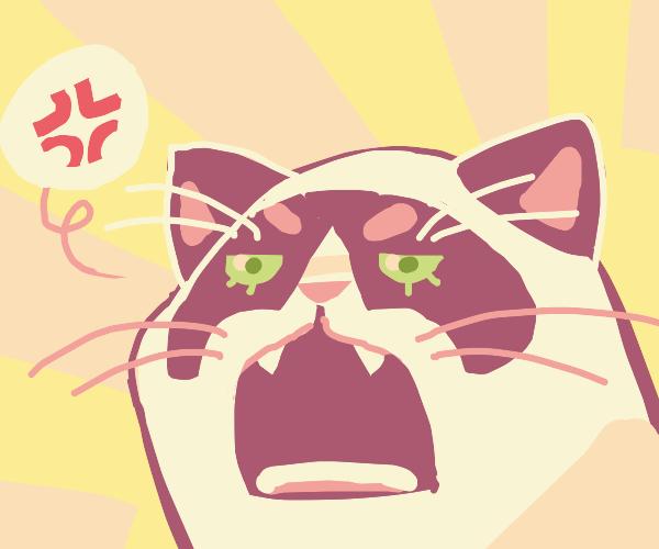 A Kitten Rawring