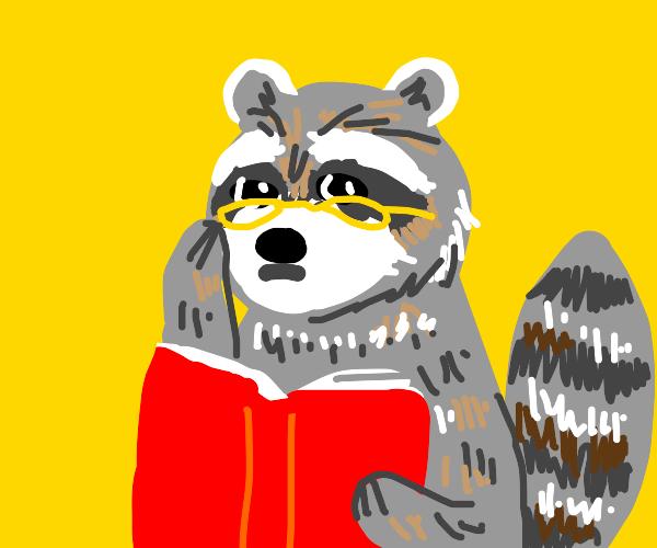 A wise raccoon