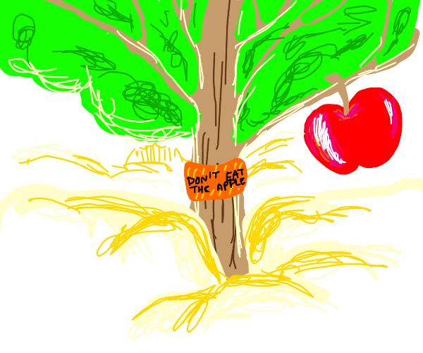 apple tree in heaven