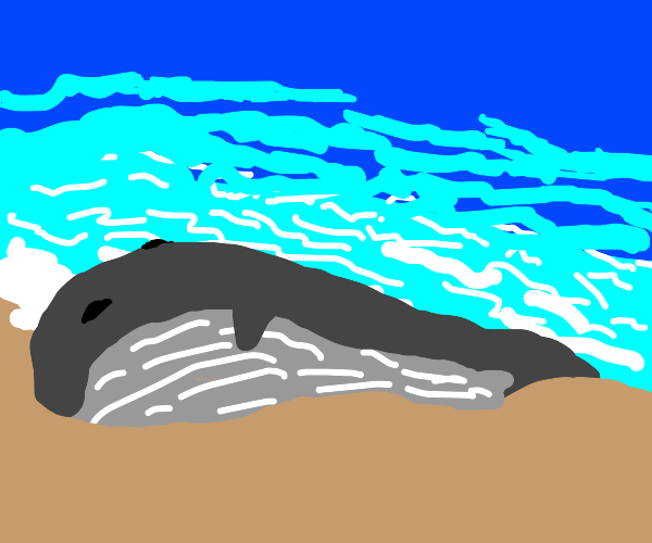 whale washed up on shore