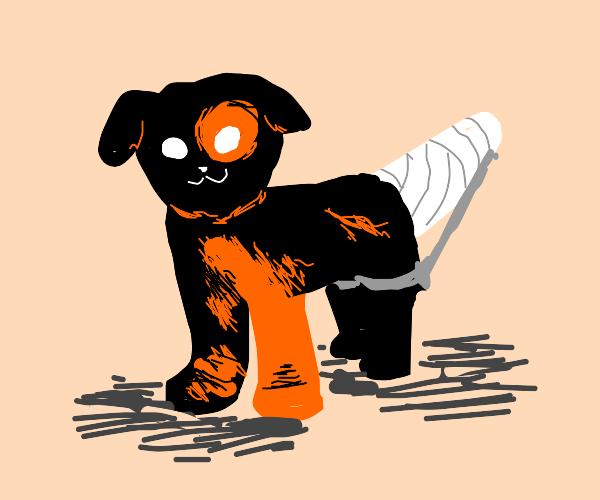 Little Black/Orange Dog hurt his tail :(