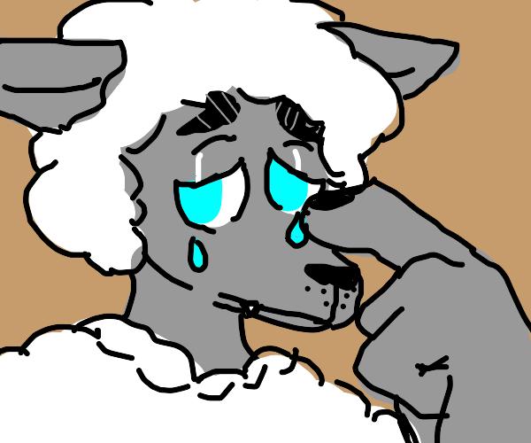 sad anthro sheep wolf