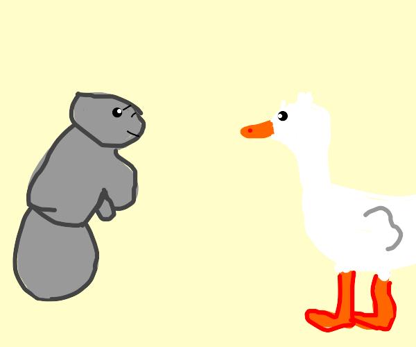 Manatee & Duck