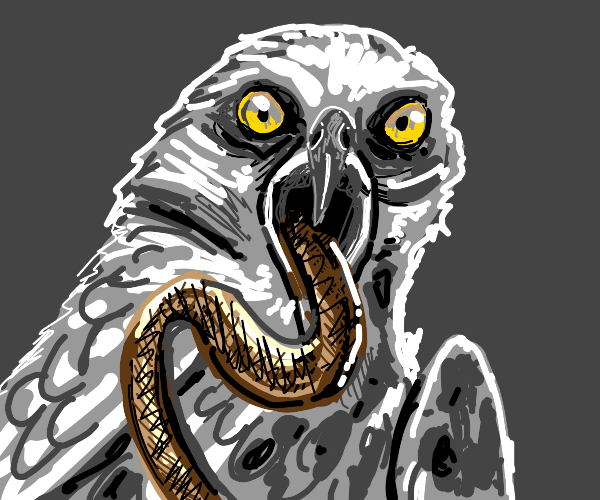 Snake eating bird