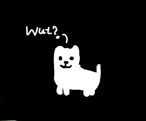 Dog is confused