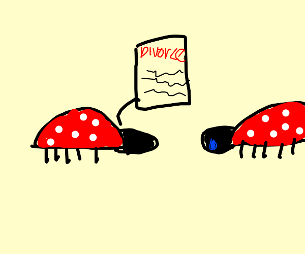 2 Ladybugs with divorce papers.